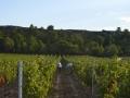 Sklizeň v jižní Francii
