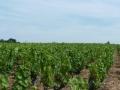 Podloží vinic cru Beaujolais