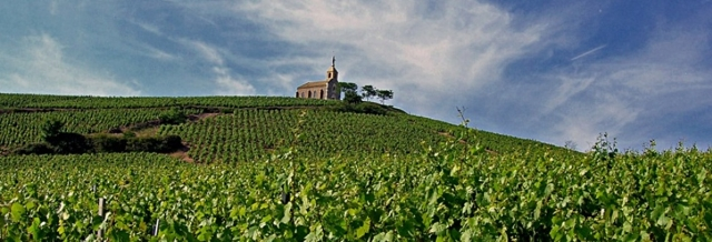 Vinice ve Fleurie