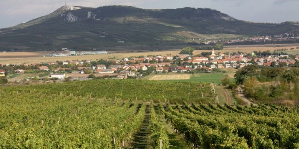 Hejtman doprovázel čínské vinařské podnikatele na cestě jižní Moravou