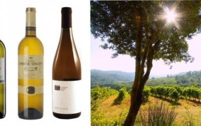 3 tipy na letní vína
