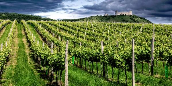 Na jižní Moravě začíná období, kdy vinaři zamykají vinice