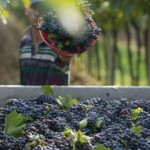 Italská vinařská oblast Veneto