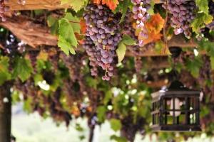 Salon vín – Národní soutěž vín ČR 2015