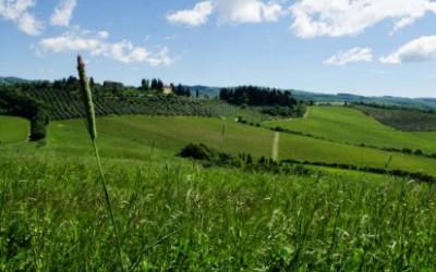 Chianti: úvod do vína
