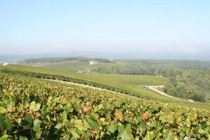 champagne-alexandre-bonnet-vigne-cote-des-bars_b