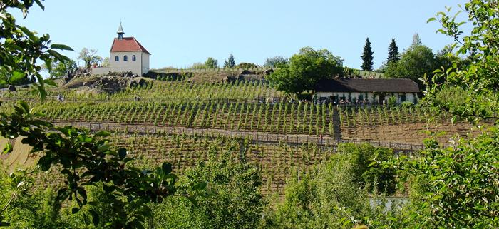 Botanická zahrada láká na mladá vína