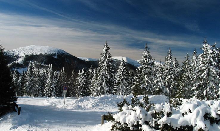 Vinice na jižní Moravě jsou po zimě v pořádku