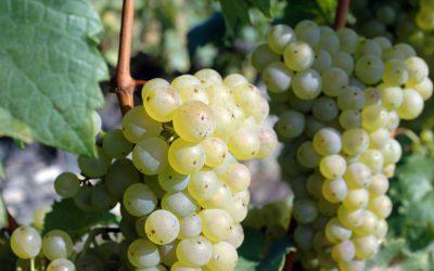 Vinařství Lednice Annovino a Valtické podzemí je TOP Vinařský turistický cíl