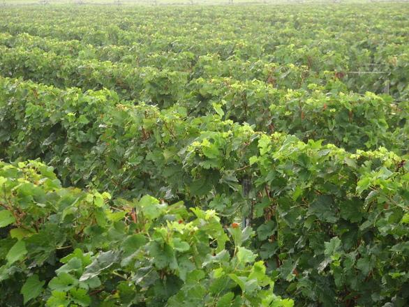 Šobes plánuje proniknout na seznam UNESCO. Jako ráj vína i archeologů