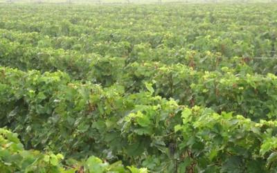 Králem vín se stalo Vinařství Fučík