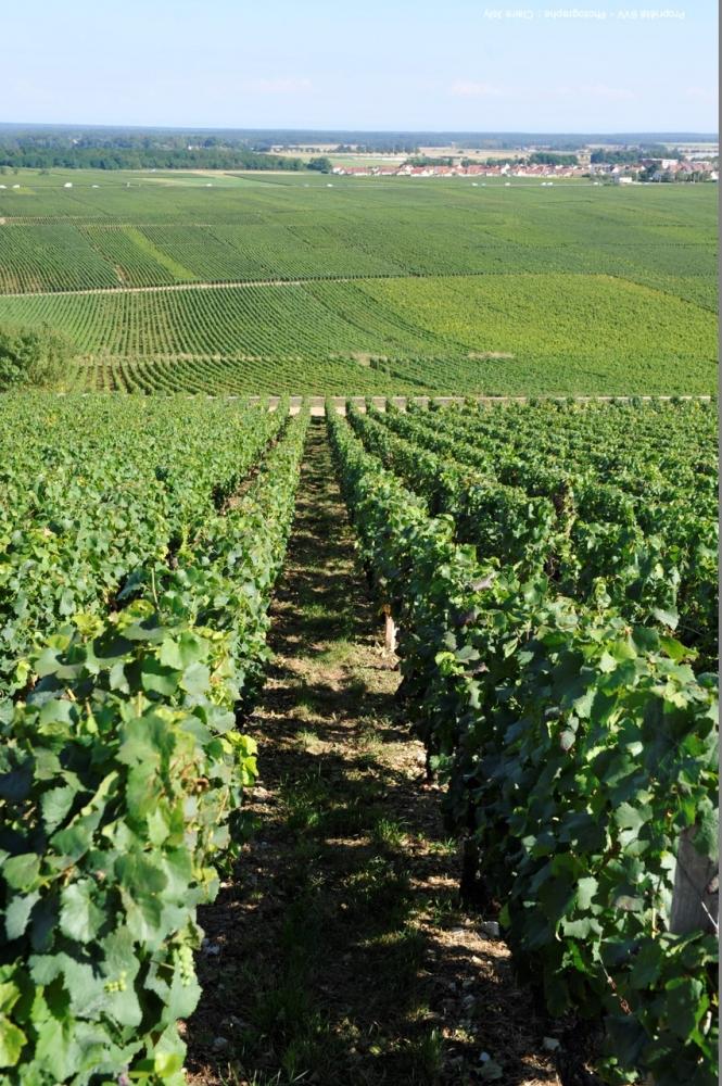 Vinařství Lahofer staví nové centrum za desítky milionů. Stavba připomíná řádky