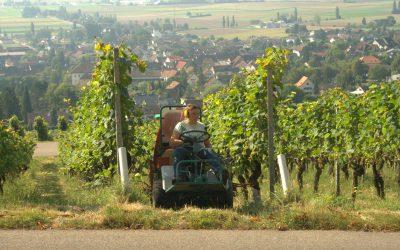 Miniprůvodce švýcarských vinařských regionů a odrůd