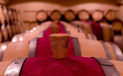 Co vládne světu velkých vín
