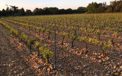 Maďarský Tokaj: Víno s barvou mědi