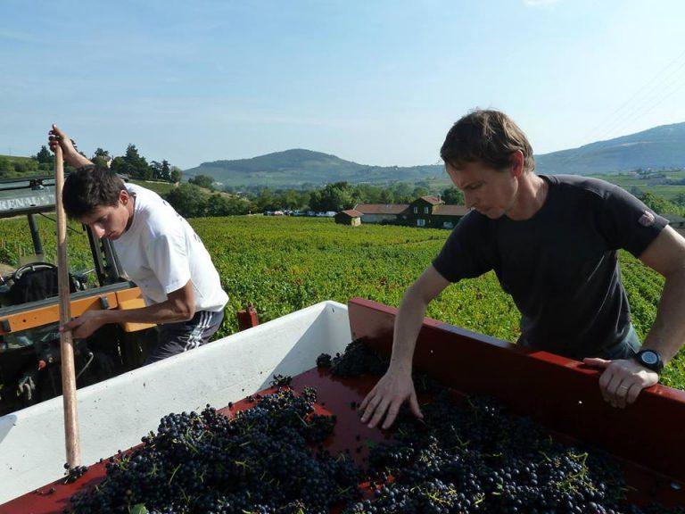 Degustace tuzemských vín v Praze, Brně a jinde v týdnu 16. až 22. září 2019