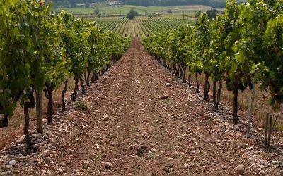 Vinice a na Marsu? Podle gruzínských vinařů to je skvělý nápad