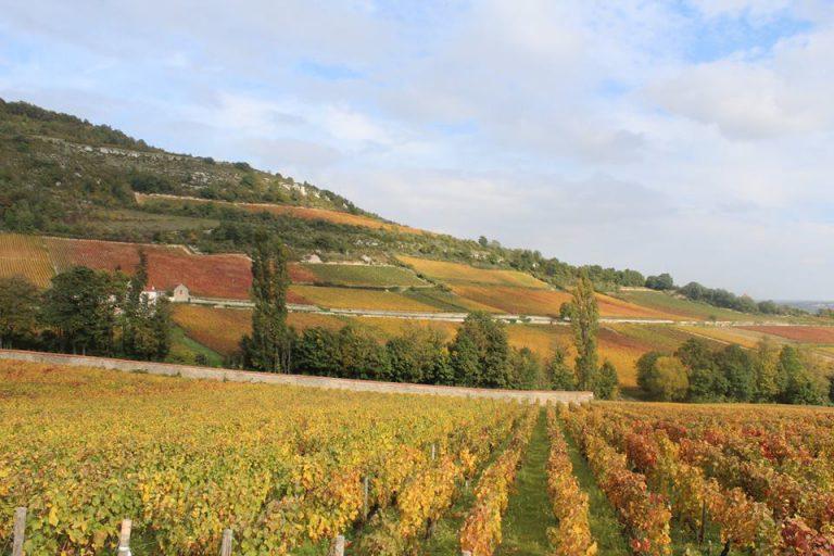 Přísný zákaz vstupu! Vinaři zamykají vinice!