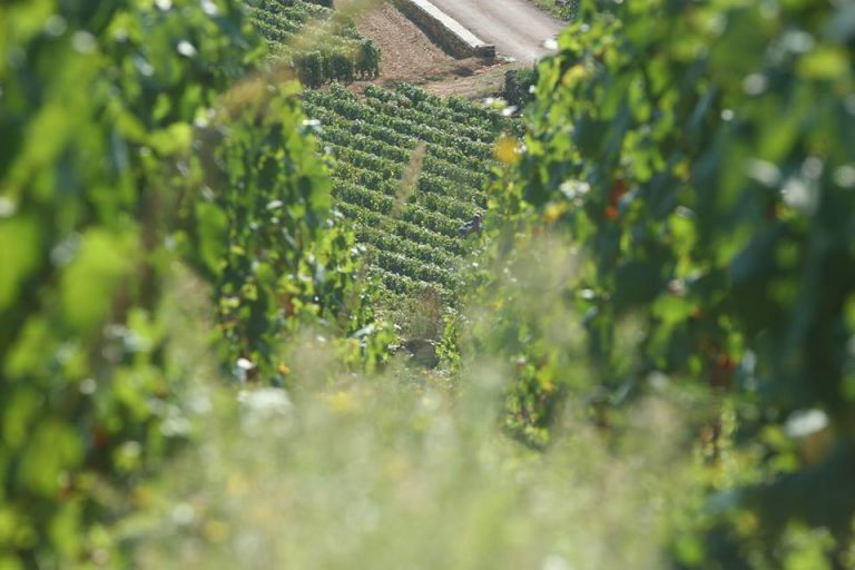 Jaro plné vína v Dolním Rakousku