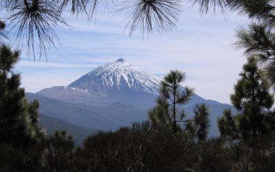 Tenerife: Na ostrov věčného jara nejen za pěknými víny