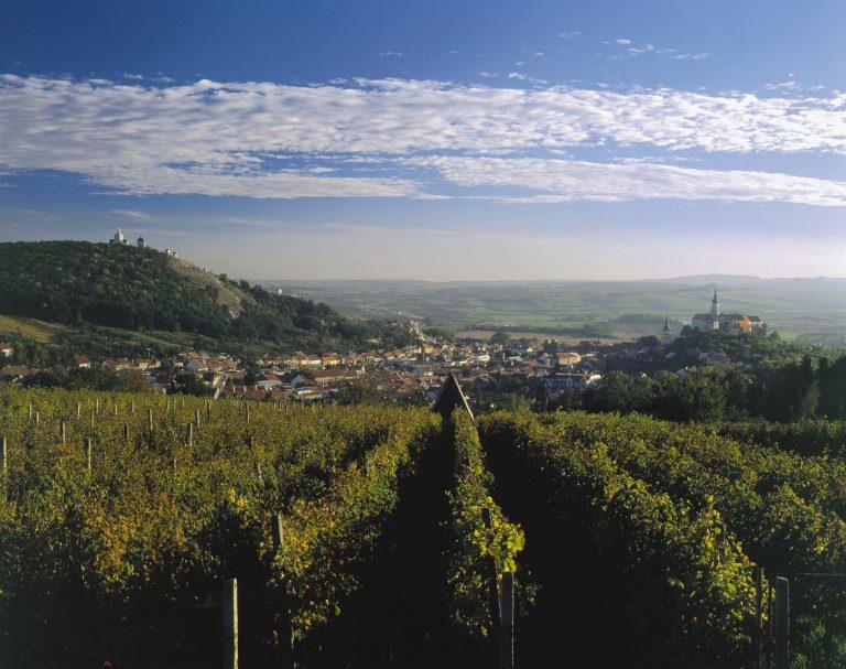 Vinaři očekávají dobrý ročník. V Česku roste plocha vinic i spotřeba vína