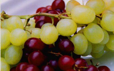Vínu škodily mrazy i sucho. Světová produkce bude nejnižší za více než 50 let