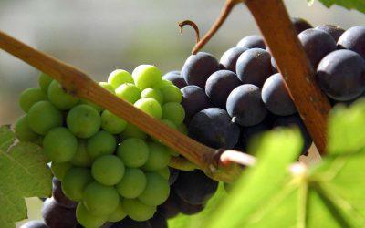 Degustaci vína může zhatit i silný parfém nebo pálivé jídlo