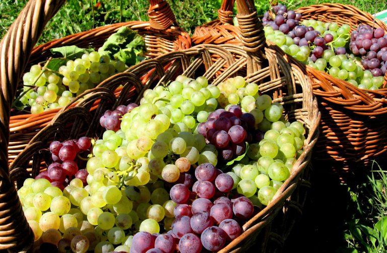 O hrdou značku původu vína VOC roste zájem, používají ji už i na Slovácku