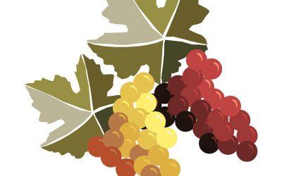 Do 15. ročníku obnovené tradice vstoupí Svatomartinská vína dříve a kvalitnější