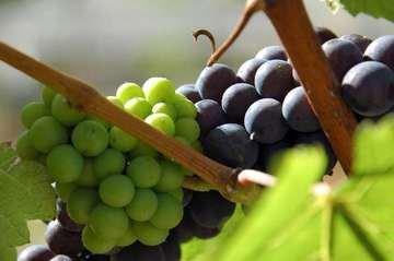 Chuť a vůně léta najdete ve víně! Trojská botanická zahrada připravila pro milovníky vína letní vinařské akce