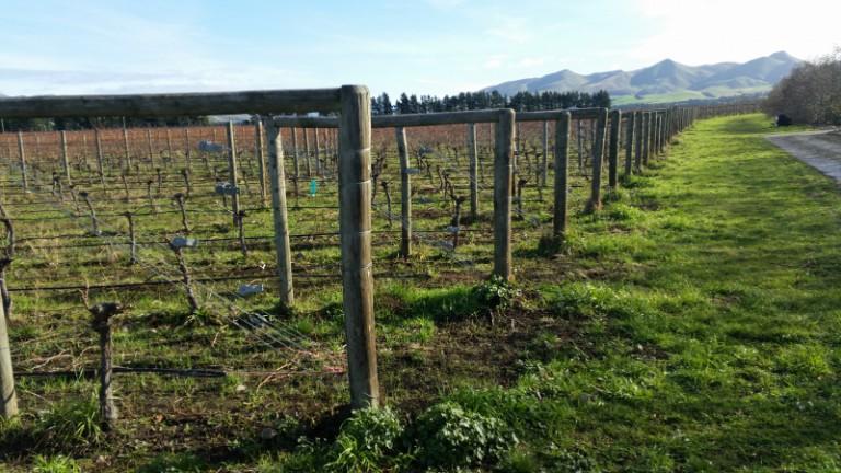 Nový Zéland, vinice regionu Waipara