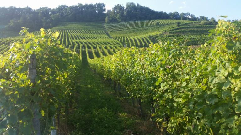 Příběh vinařky Dominiky Černohorské: Pražákům ne. Dám to tobě, ty se o to budeš starat