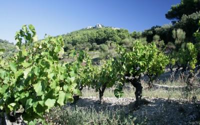 Produkce francouzského vína letos klesne, zejména z oblasti Champagne