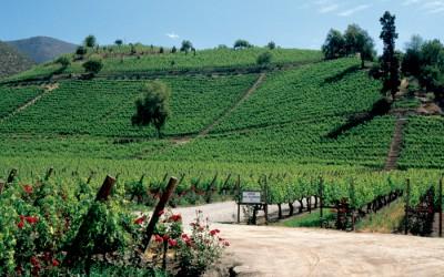 Každý vinař se ke svému bohu modlí, aby nepřišly deště, hodnotí letošní úrodu prezident Svazu vinařů